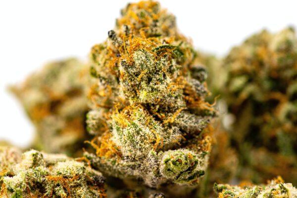 Oregon Bud Company Recreational Marijuana Dispensary Keizer